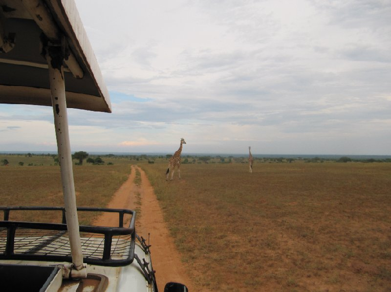 Photo Uganda tours and safaris expect