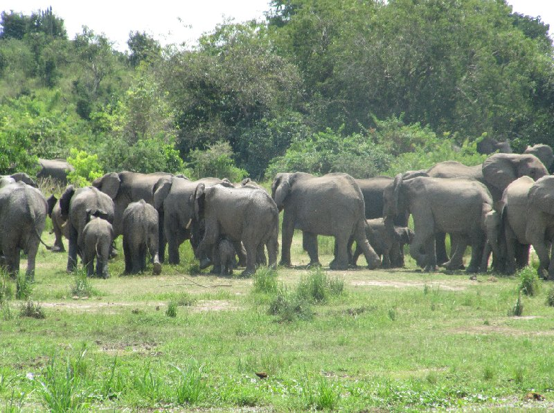 Uganda tours and safaris Masindi Review Picture
