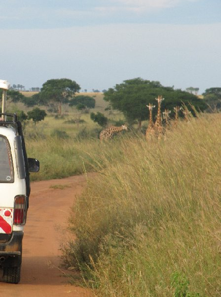 Photo Uganda tours and safaris supervision