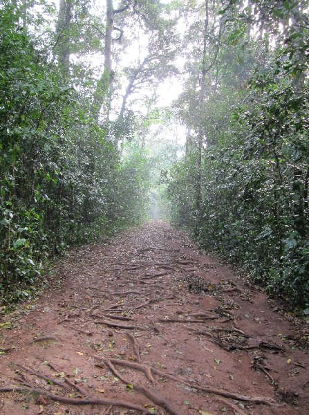 Chimp trekking Uganda Fort Portal Diary Adventure