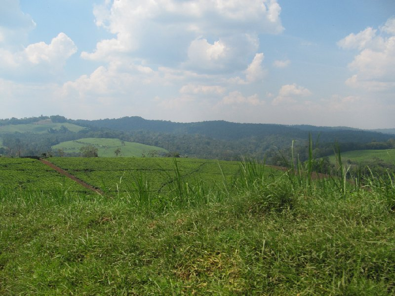 Chimp trekking Uganda Fort Portal Vacation Tips