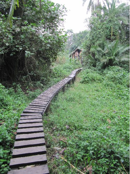 Chimp trekking Uganda Fort Portal Blog Information
