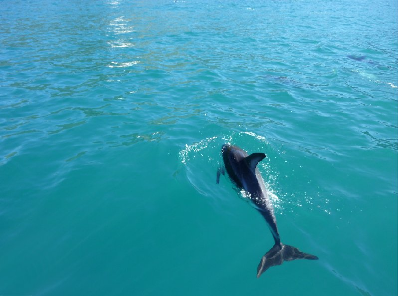 Photo Wildlife tours in Kaikoura New Zealand turned