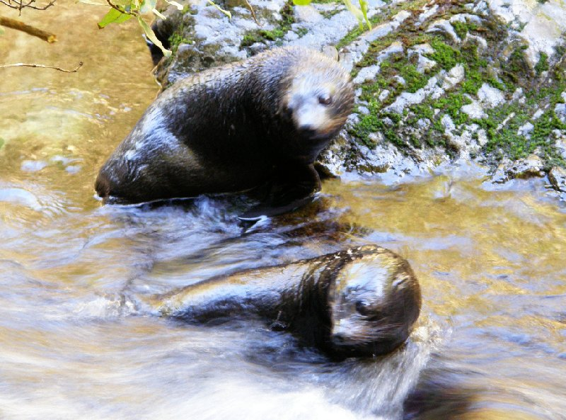 Photo Wildlife tours in Kaikoura New Zealand perfect