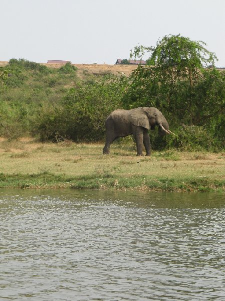 Uganda wildlife safari Kasese Diary Tips