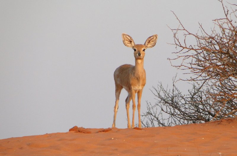 Namibia Kalahari Desert lodge safari Otjiwarongo Blog Picture