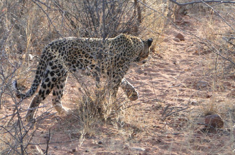 Namibia Kalahari Desert lodge safari Otjiwarongo Diary Photo