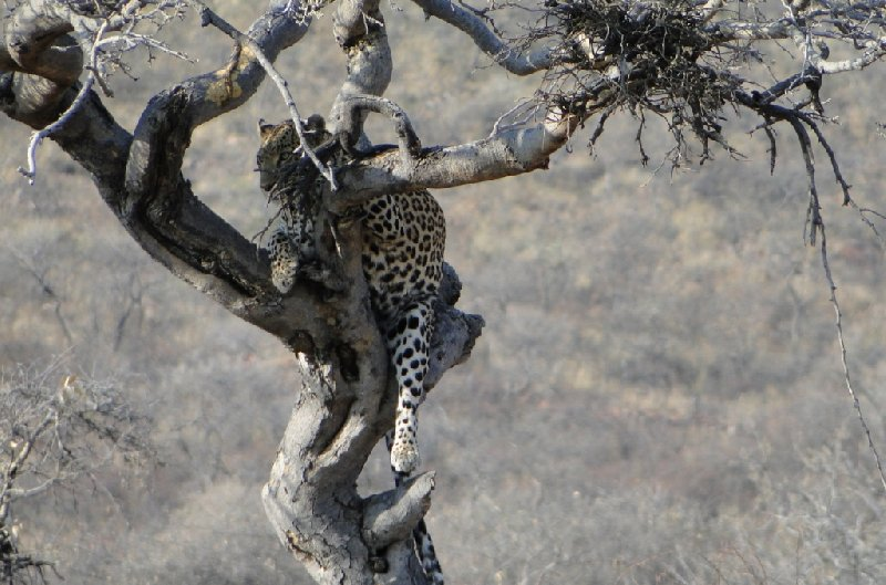 Namibia Kalahari Desert lodge safari Otjiwarongo Blog Adventure