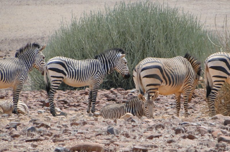 Otjiwarongo Namibia Travel Adventure