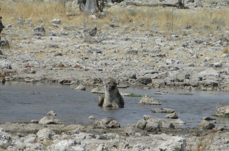 Photo Namibia Kalahari Desert lodge safari Africat