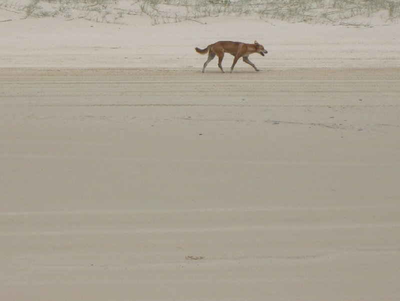 Fraser Island Tour Australia Blog Photo