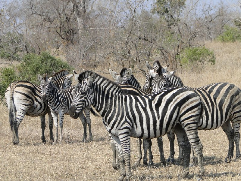 Kruger National Park camping safari Mpumalanga South Africa Diary Information