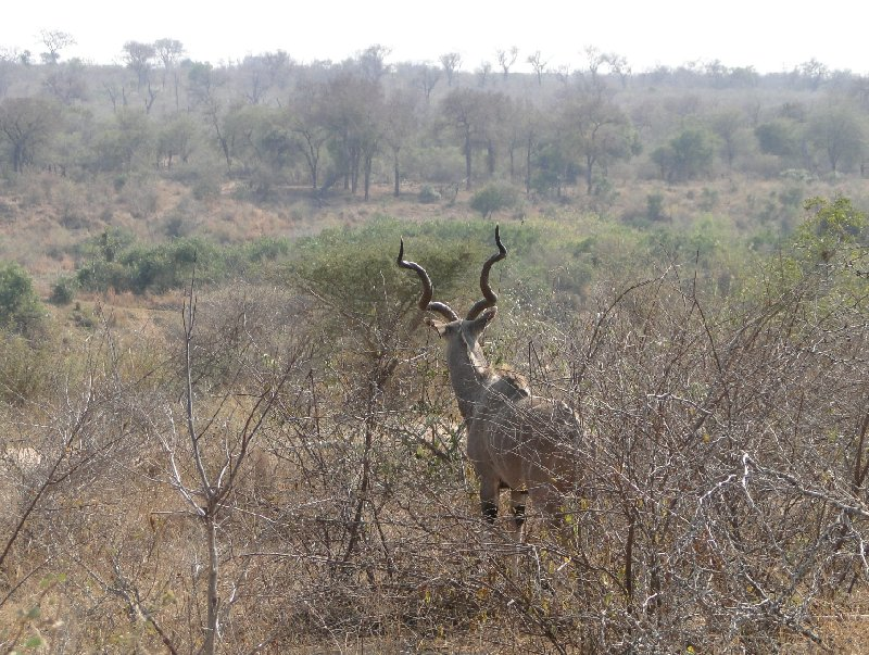 Photo Kruger National Park camping safari National