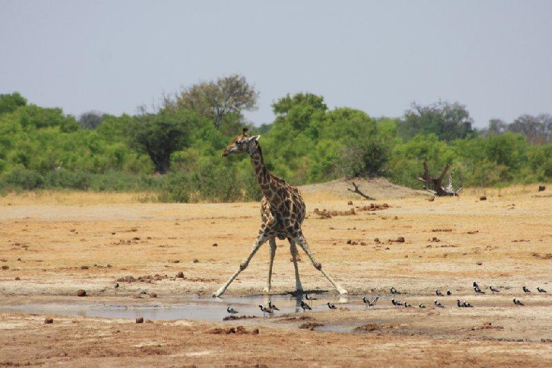 Safari Hwange Zimbabwe Diary Experience