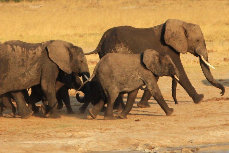 Safari Hwange Zimbabwe Vacation Information
