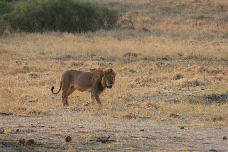 Safari Hwange Zimbabwe Holiday Pictures