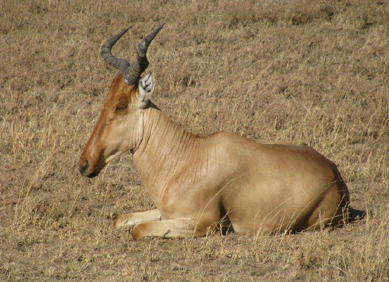 Photo Ngorongoro Crater Lodge safari travel