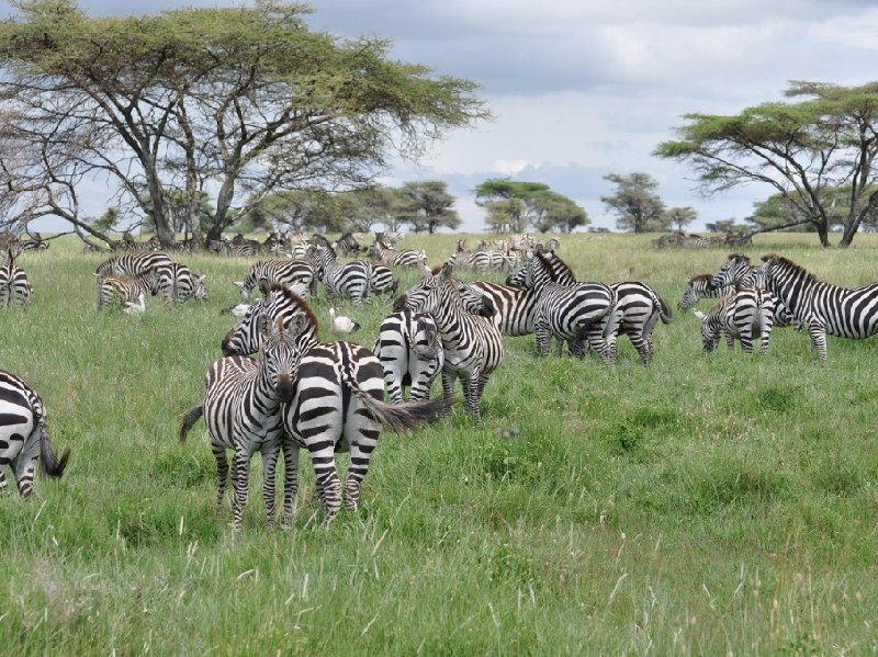Serengeti NP Tanzania migration safari Seronera Trip Photo