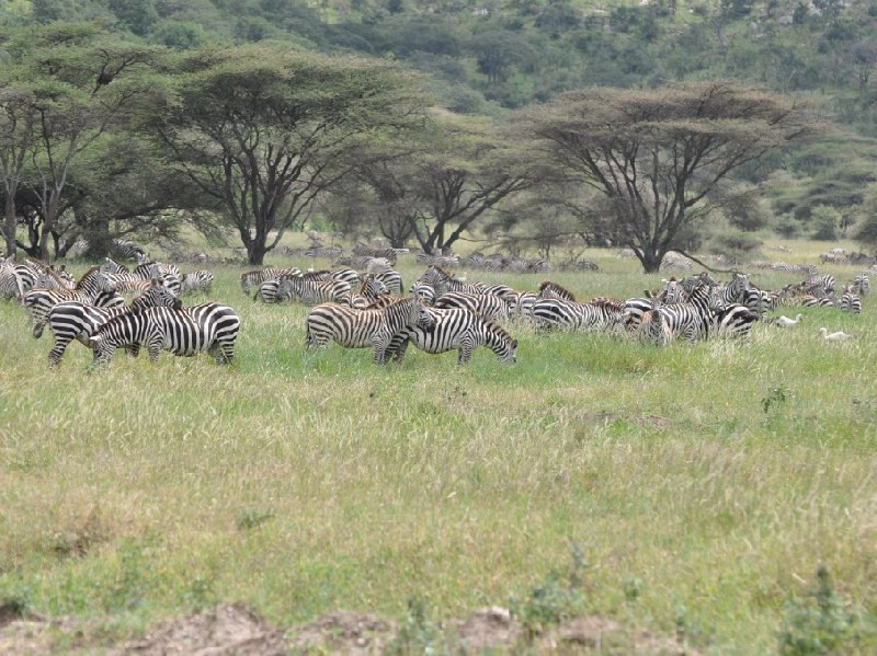 Serengeti NP Tanzania migration safari Seronera Travel Sharing
