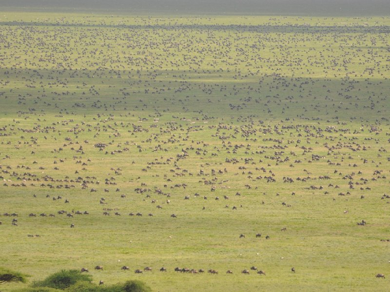 Photo Serengeti NP Tanzania migration safari wildebeest
