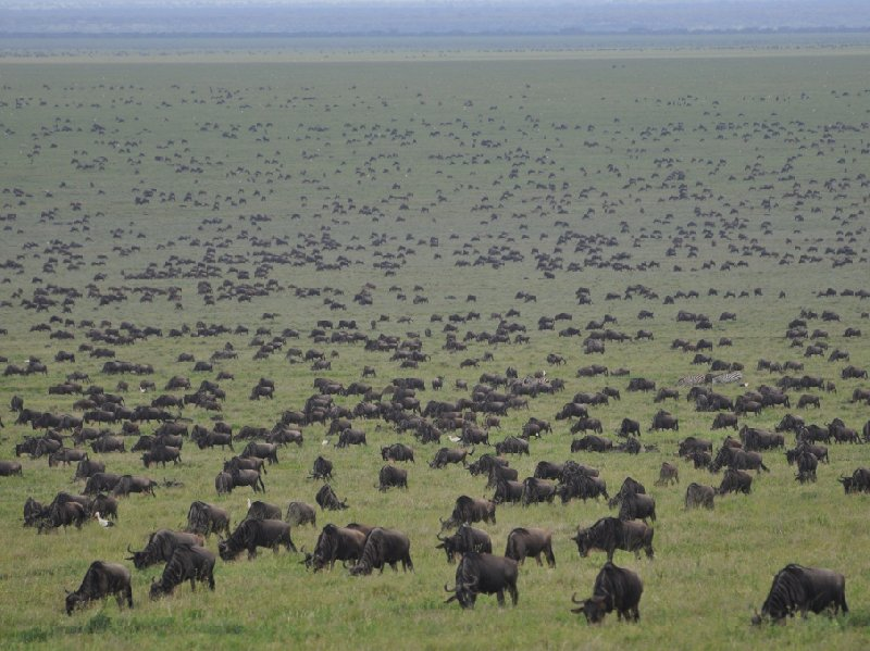 Photo Serengeti NP Tanzania migration safari migration