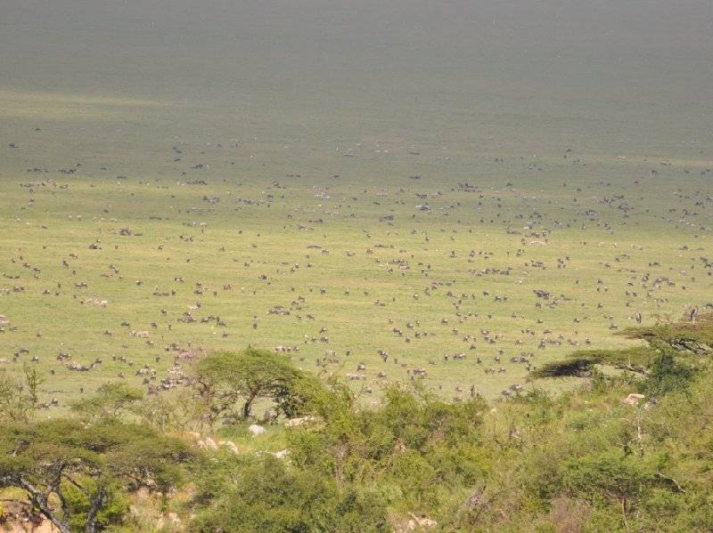 Photo Serengeti NP Tanzania migration safari wildlife