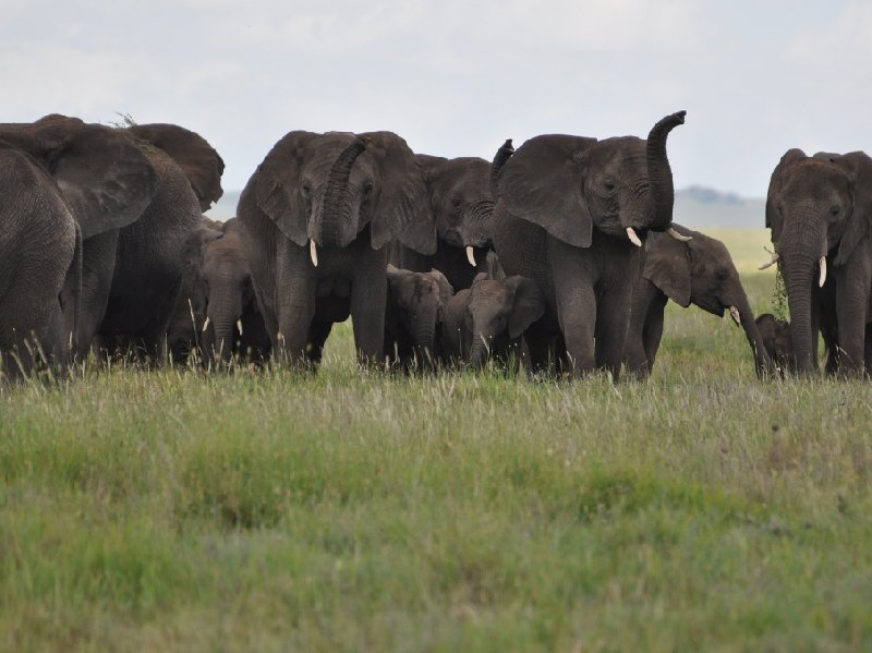 Photo Serengeti NP Tanzania migration safari spotting