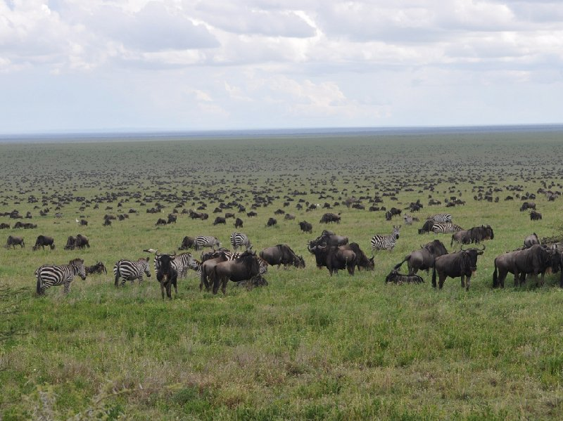 Photo Serengeti NP Tanzania migration safari unfortunately