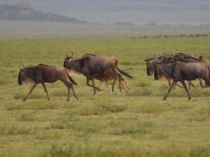 Photo Serengeti NP Tanzania migration safari travel