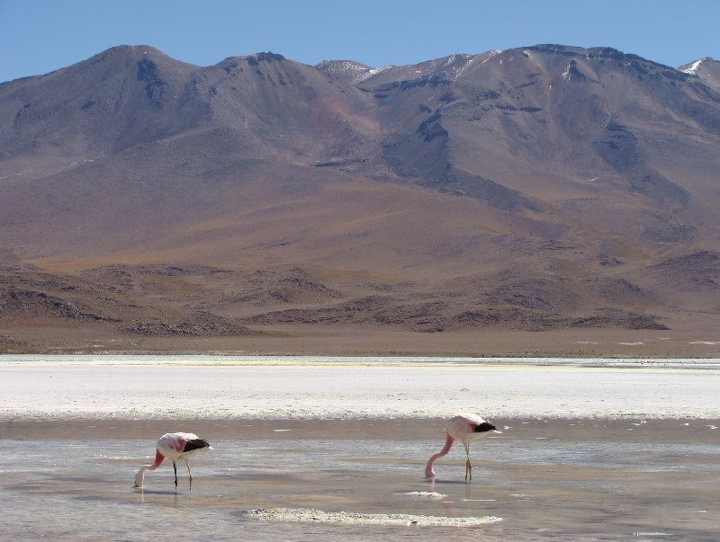 Salar de Uyuni tour in Bolivia Potosi Review Photo