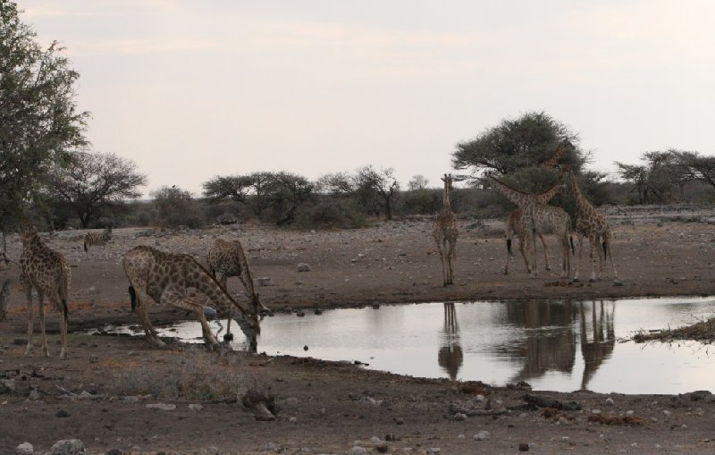 Photo Etosha National Park Namibia fascinating
