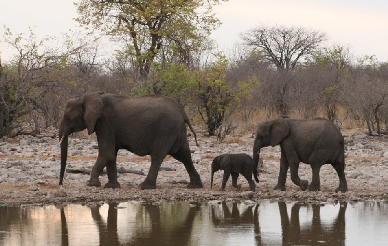 Etosha National Park Namibia Blog Adventure
