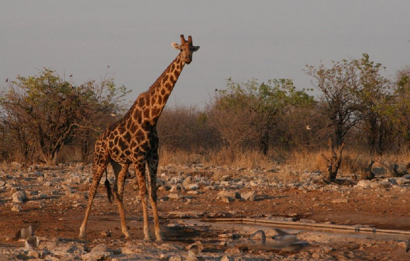 Photo Etosha National Park Namibia continent