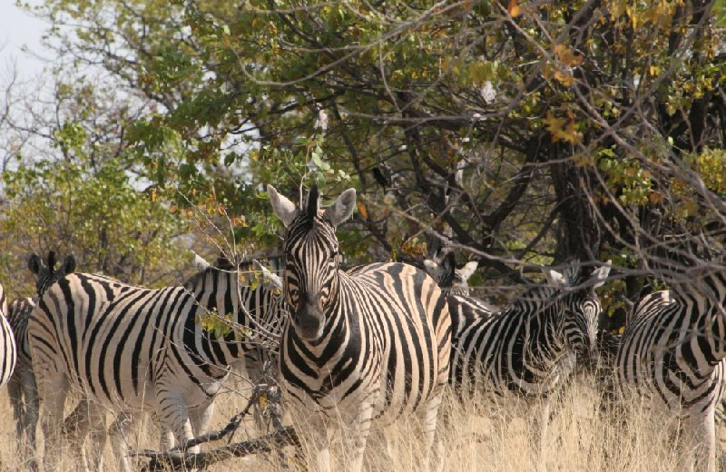 Photo Etosha National Park Namibia choice