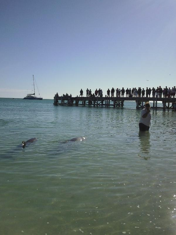 Feeding at Monkey Mia Dolphin Resort Australia Review Photo