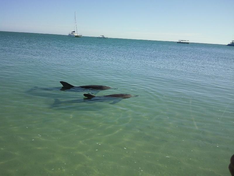 Photo Feeding at Monkey Mia Dolphin Resort coastal