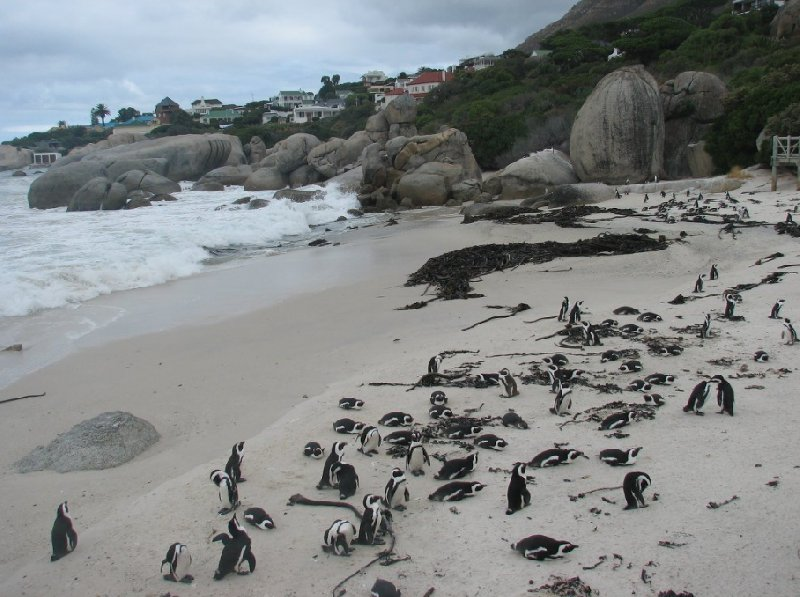 Cape Town South Africa Review Picture
