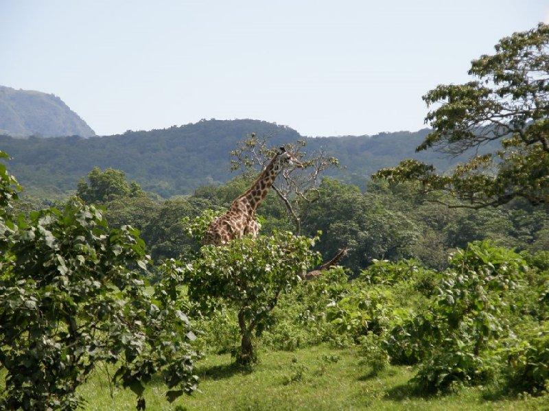 From Arusha to the Kuro Airstrip Tanzania Trip Experience