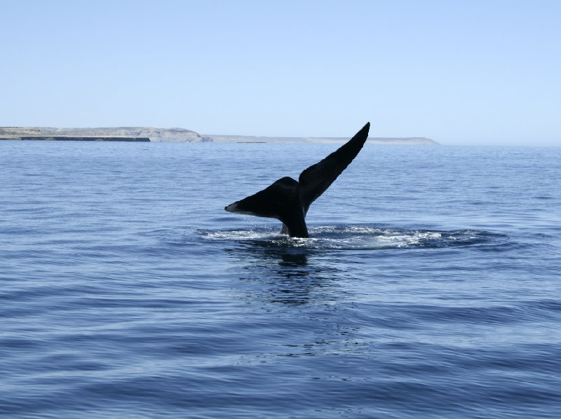 Puerto Madryn Patagonia Wildlife Tours Argentina Travel Blog