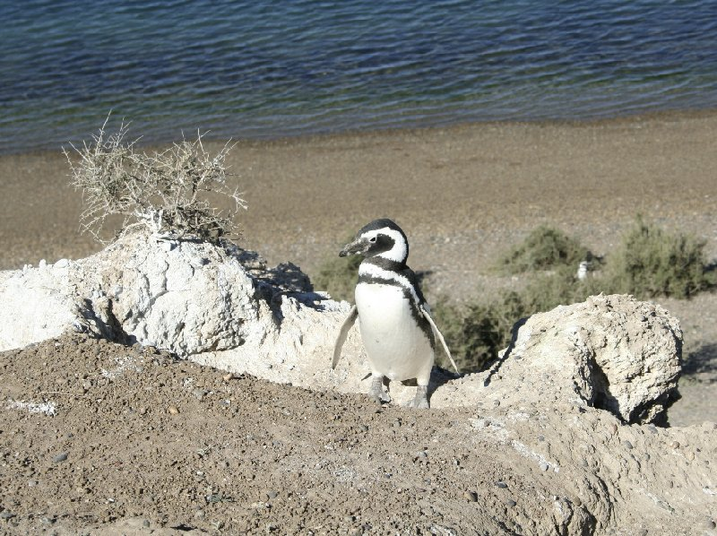 Puerto Madryn Patagonia Wildlife Tours Argentina Blog Photos