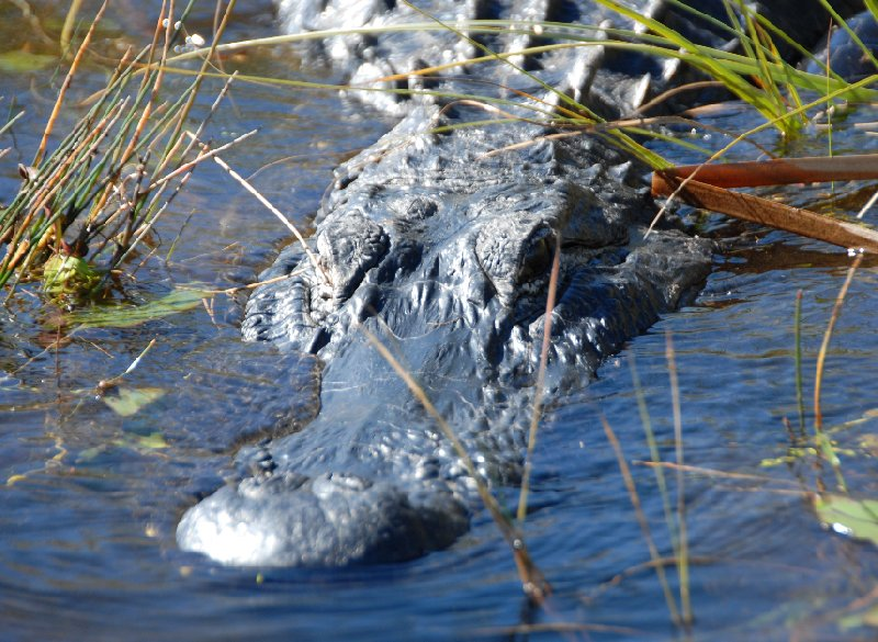 Everglades National Park Boat Tour United States Holiday Review