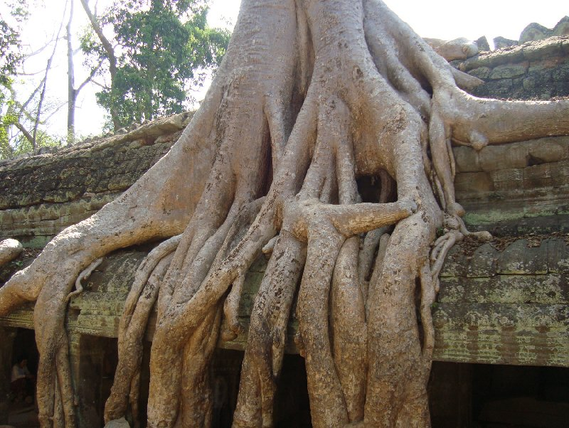 Photo Siem Reap Temple Tour touristic