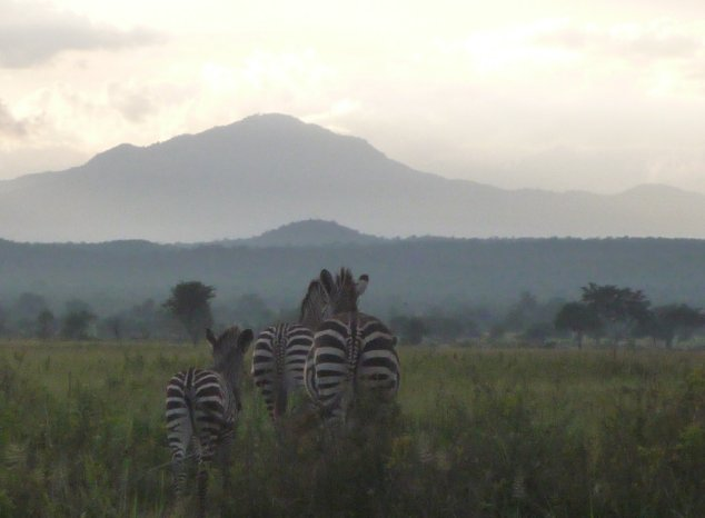 Mikumi National Park Safari Tanzania Review