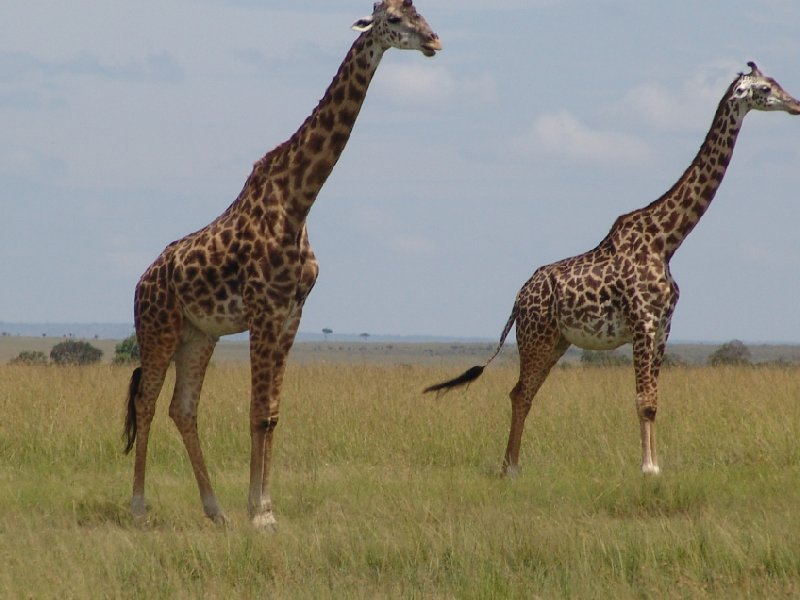 Photo Great Masai Mara Camp Stay Kenya August