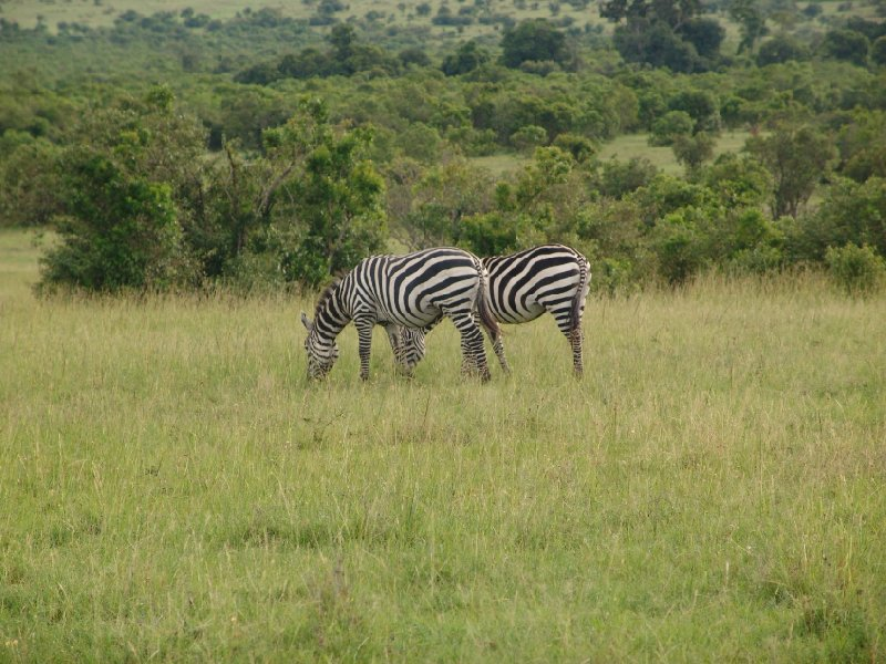 Great Masai Mara Camp Stay Kenya Diary