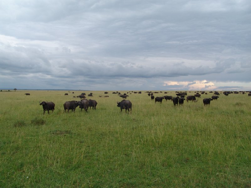 Great Masai Mara Camp Stay Kenya Trip Photographs