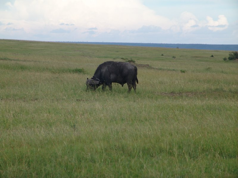Great Masai Mara Camp Stay Kenya Holiday Experience