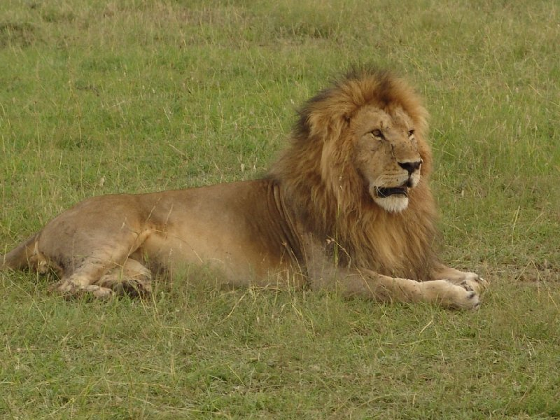 Great Masai Mara Camp Stay Kenya Diary Picture