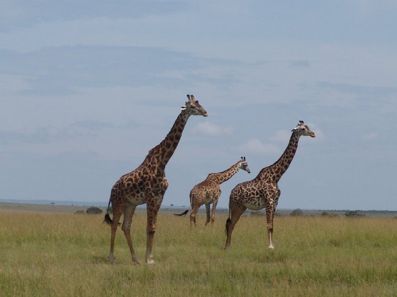 Great Masai Mara Camp Stay Kenya Photos