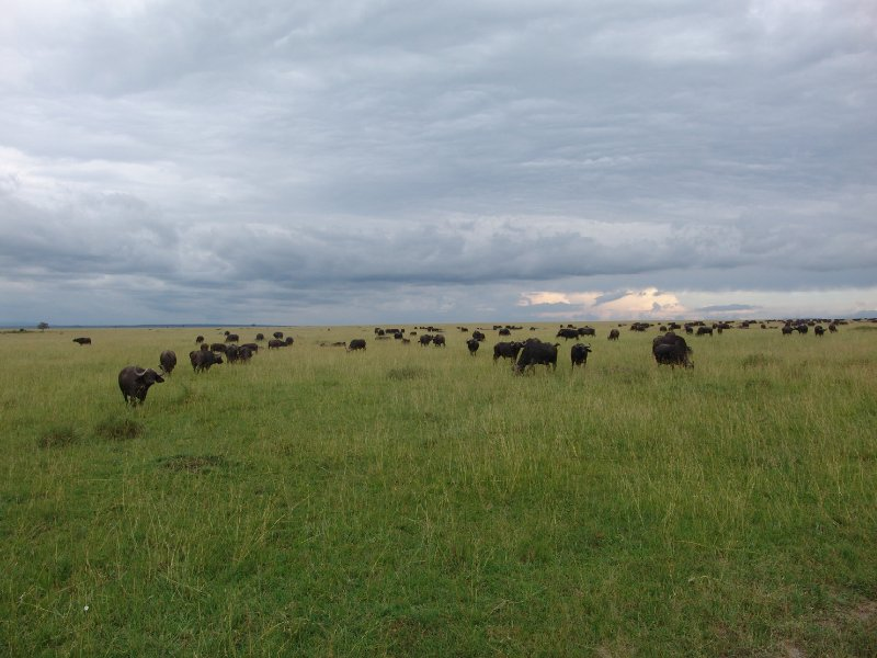 Great Masai Mara Camp Stay Kenya Travel Review